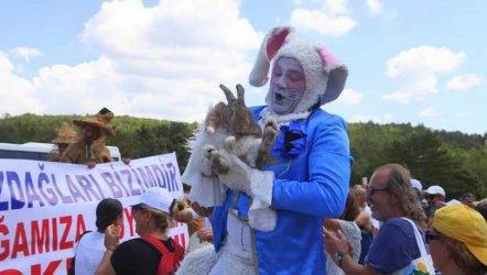 Provakatör Tavşan